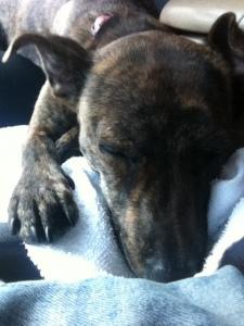 Dog Park Sleep