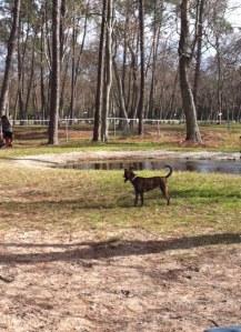 Dog Park Tiny