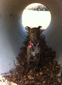 Dog Park Tunnel2