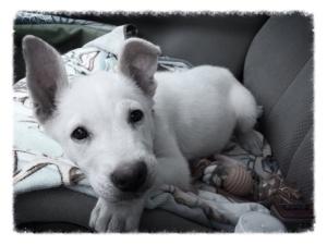 emmie-birthday-dog-birthday2